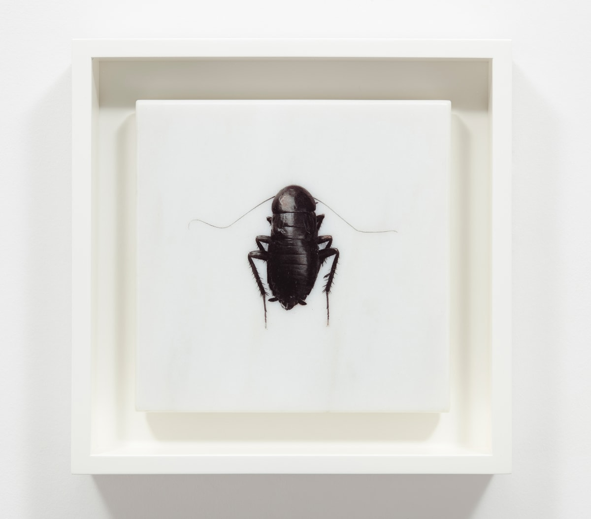 Helen CHADWICK Et in Arcadia, 1995 Photo etching printed on marble, presented in a clam shell box. 20 x 20 x 2 cm Edition 6 of 15