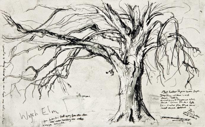 Kate Downie RSA Wych Elm Etching 45 x 76 cm Edition of 100
