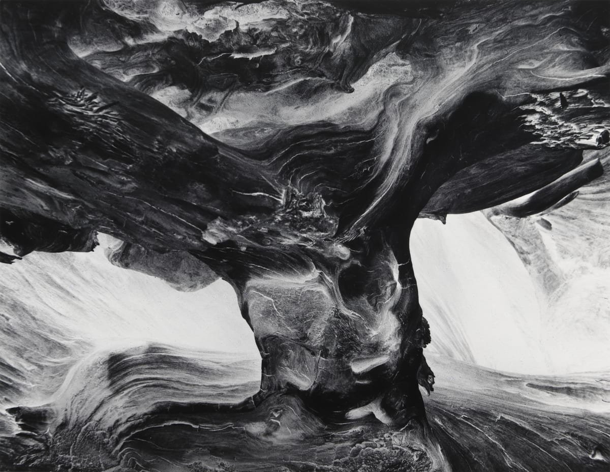 Wynn Bullock, Tree Trunk, 1971