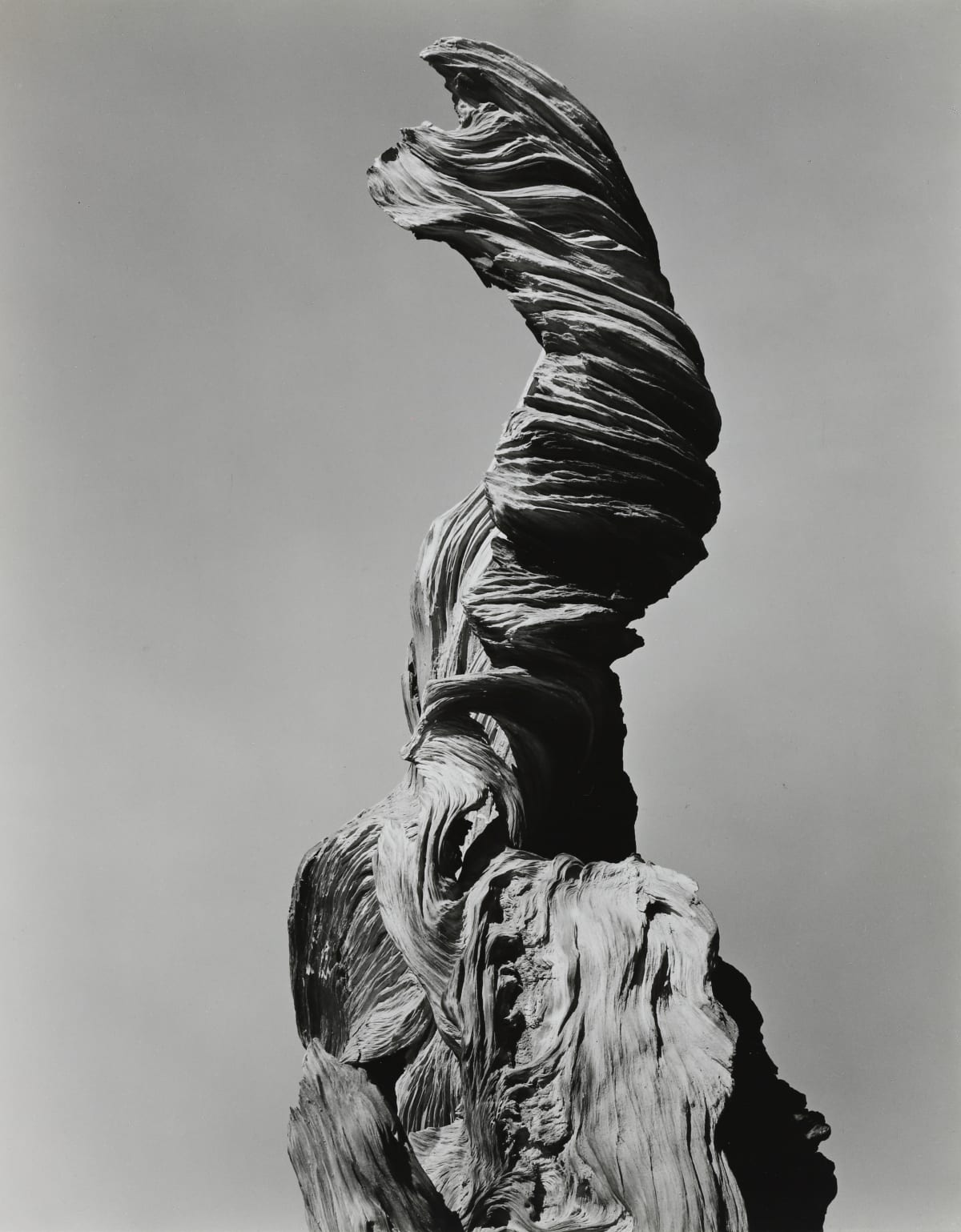Edward Weston, Stump Against Sky, 1936