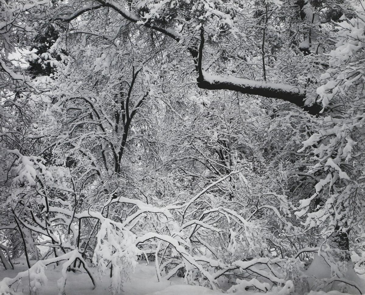 Ansel Adams, Fresh Snow, Yosemite Valley, 1947