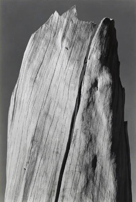 Ansel Adams, Stump, Sierra Nevada, 1936