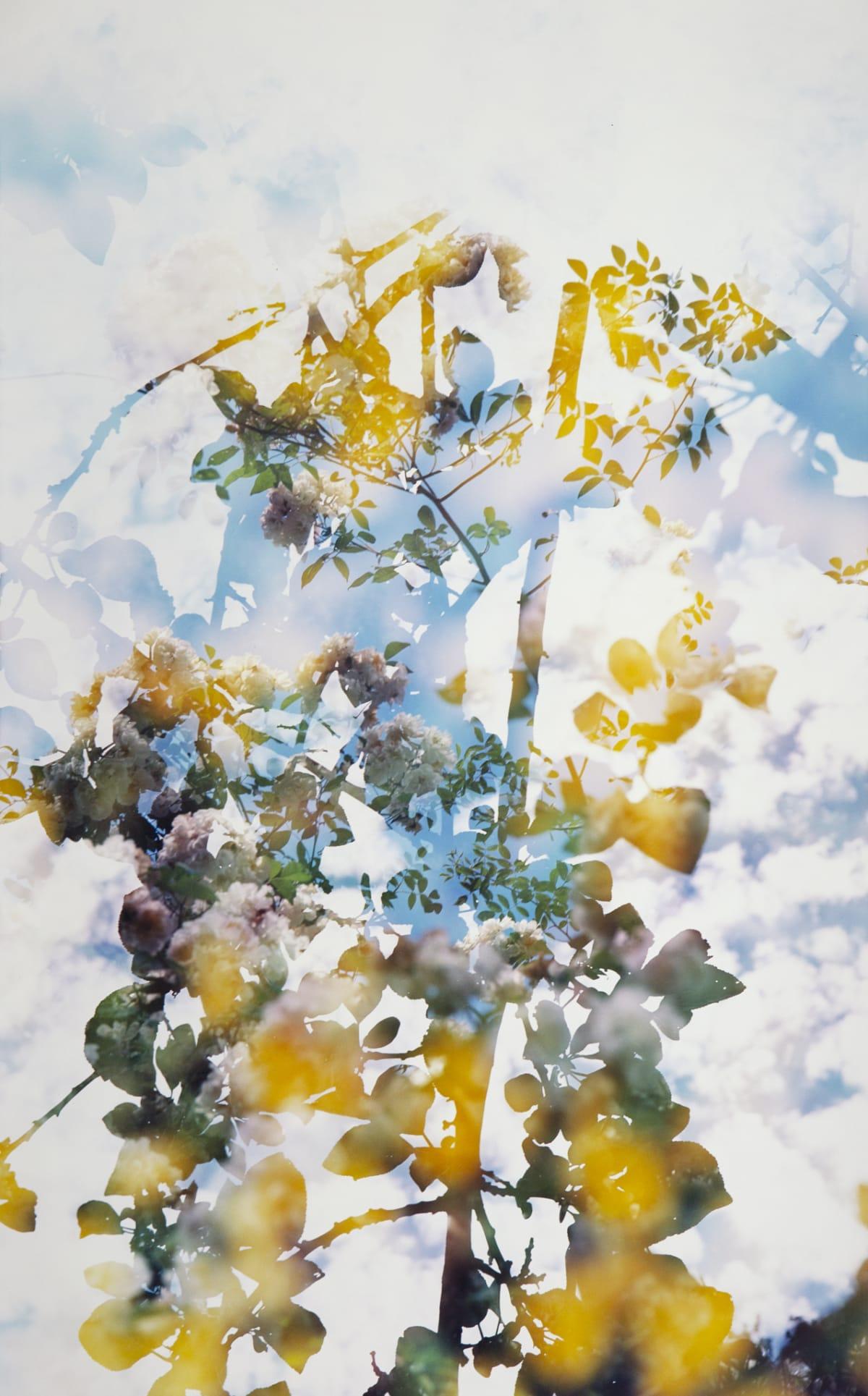 Erle M. Kyllingmark, Untitled Journey #12, 2018