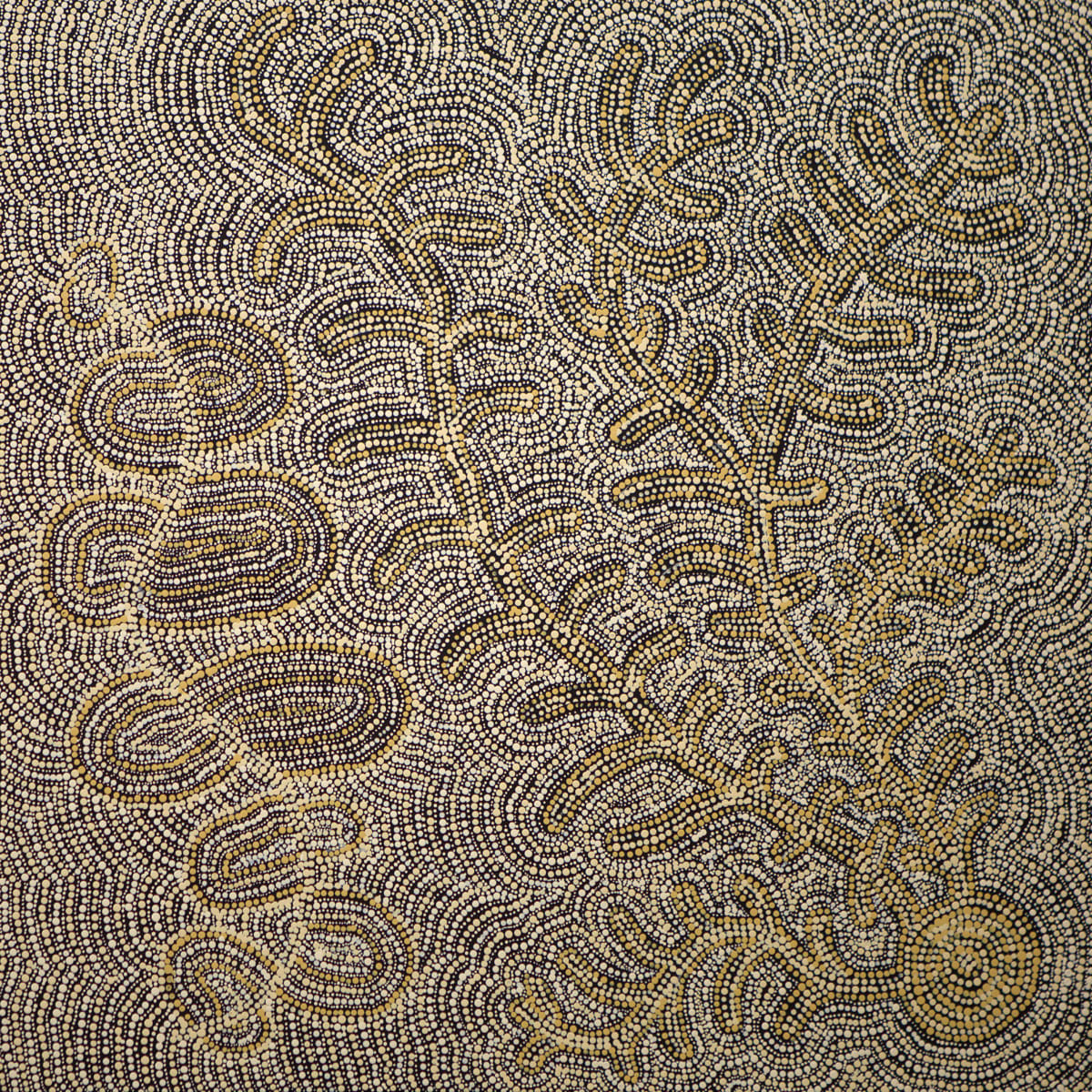 Umatji Tjitayi Kaliny-Kaliny Honey Grevillea, 2019 Acrylic on Canvas 68x68cm