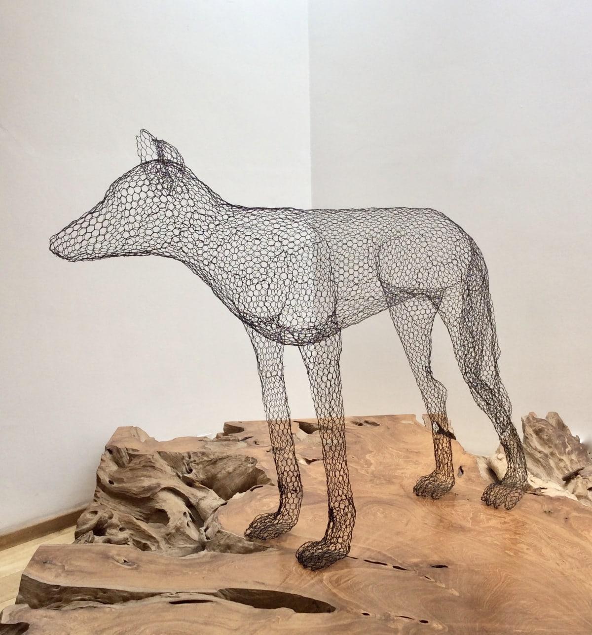 Wolf, 2017