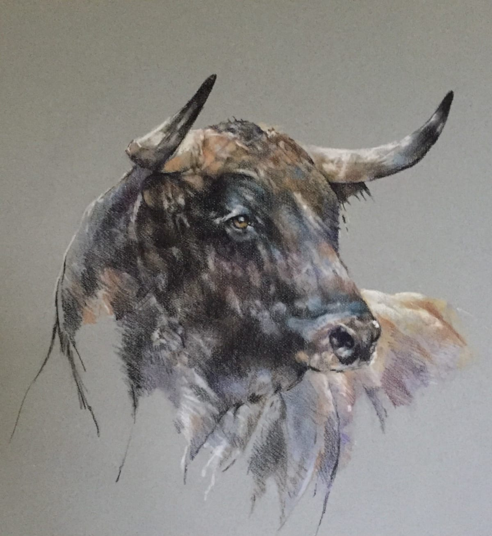 Paula Vize MIURA BULL Pastel 33 x 27 in. 83.82 x 68.58 cm