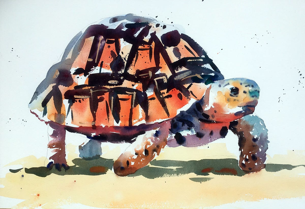Jake Winkle TRAVELLING TORTOISE Watercolour 13 x 18 in 33 x 45.7 cm