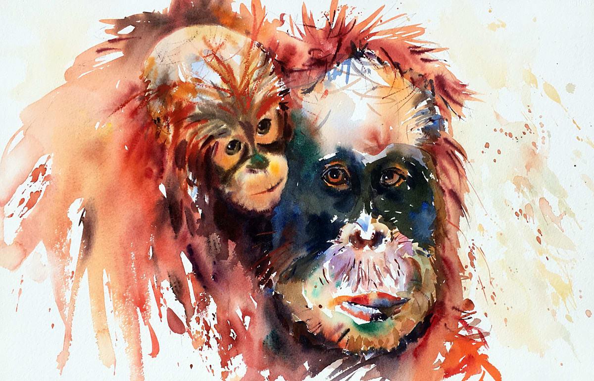 Jake Winkle ORANGUTAN Watercolour 18 x 13 in. 45.72 x 33.02 cm