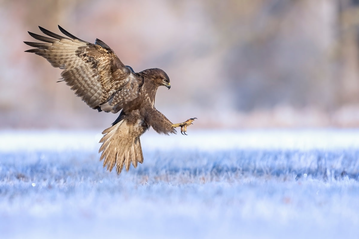 Flying Hunter
