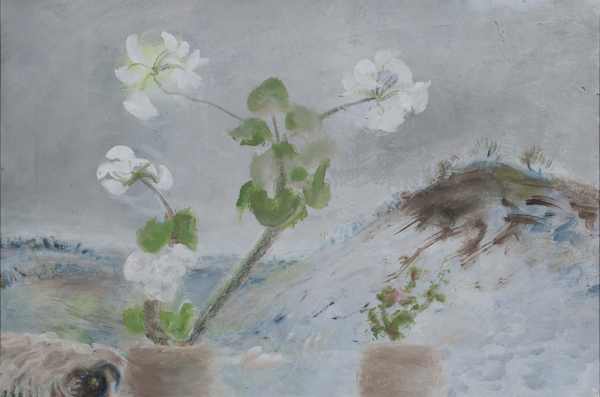 Winifred NICHOLSON (1893 – 1981) Kathleens White Geranium, 1978 Oil on canvas 15 7/8 x 24 inches / 40.5 x 61 cm