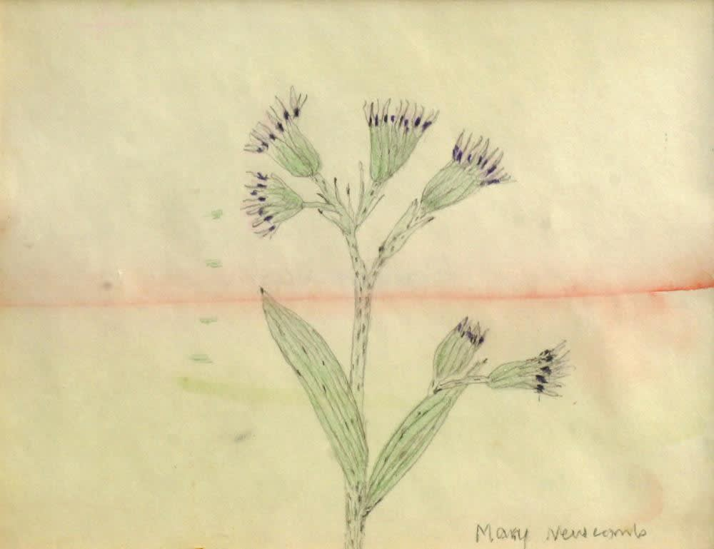Mary Newcomb, Thistles