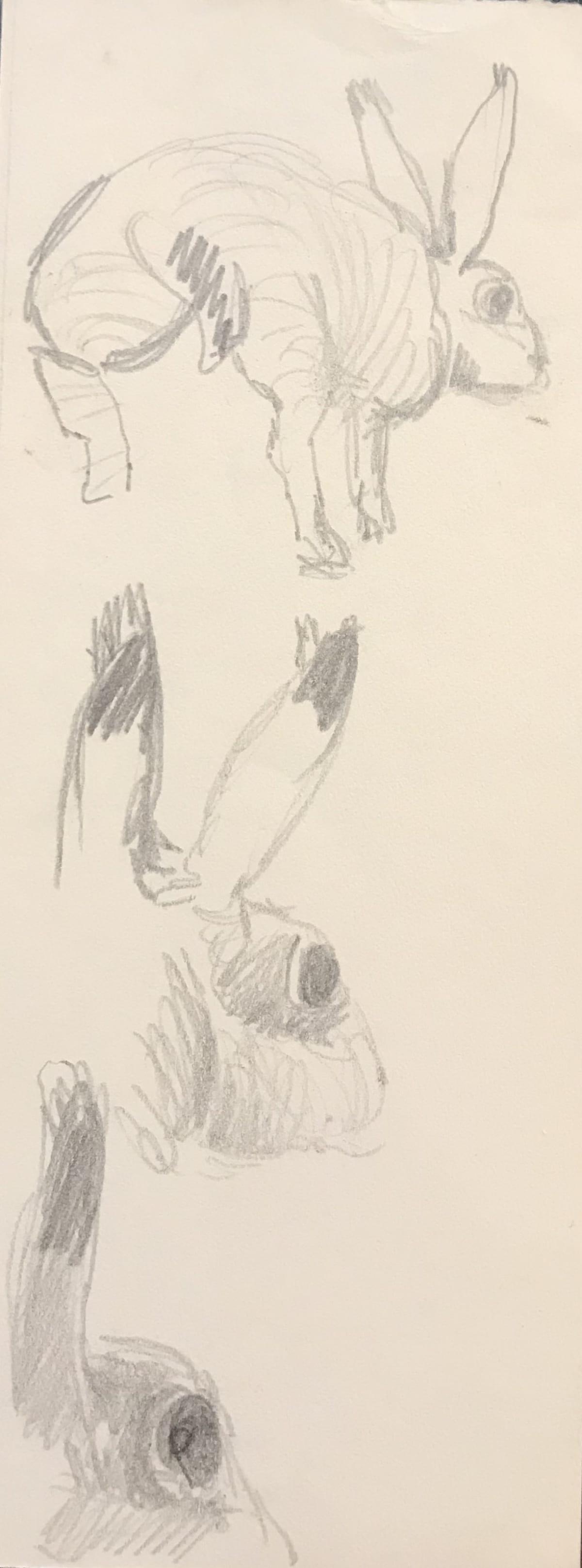 Mary Newcomb, Rabbit Study
