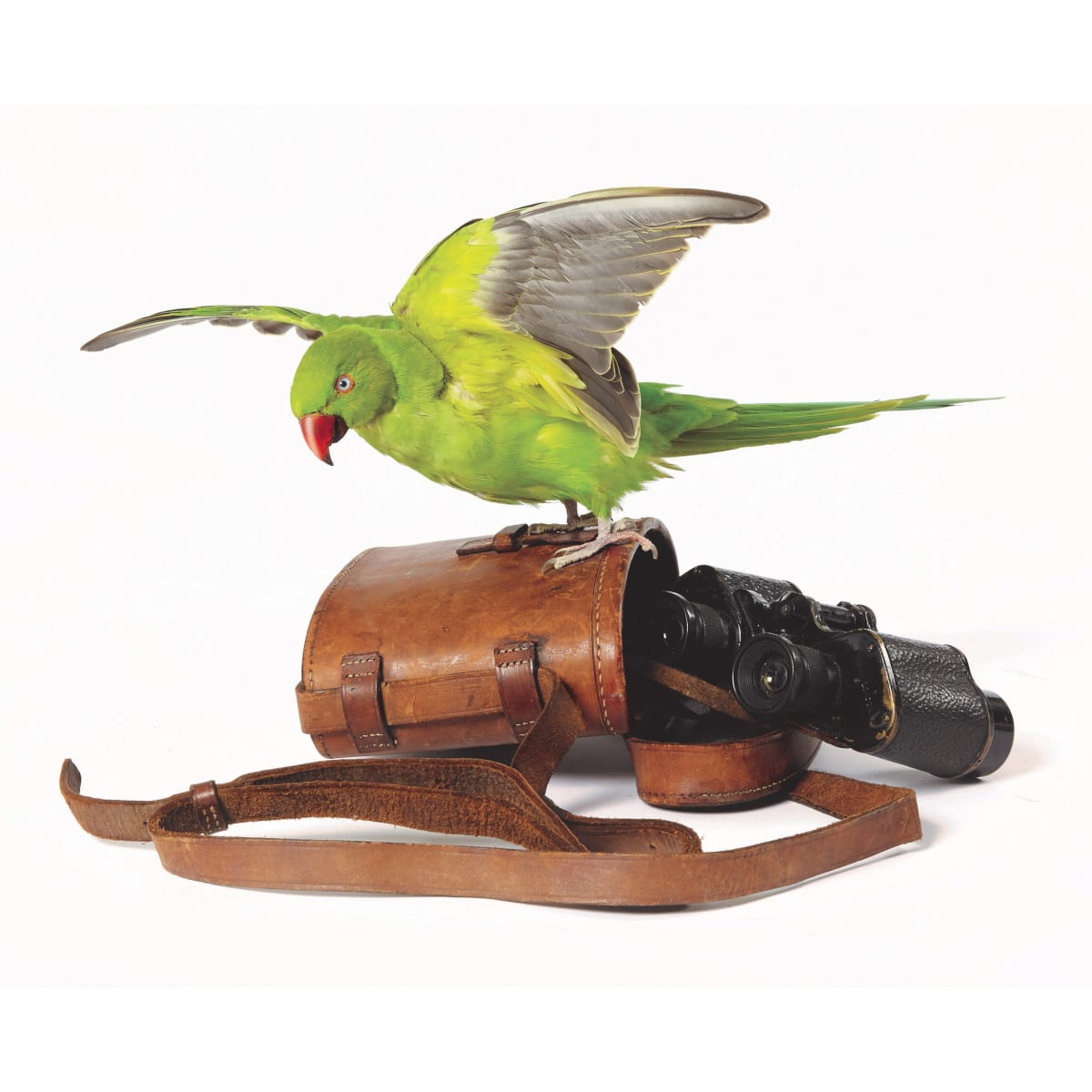 Fiona Dean Right to Remain, 2019 ring-necked parakeet with antique military binoculars in mirrored case 38 x 65 x 55 cm