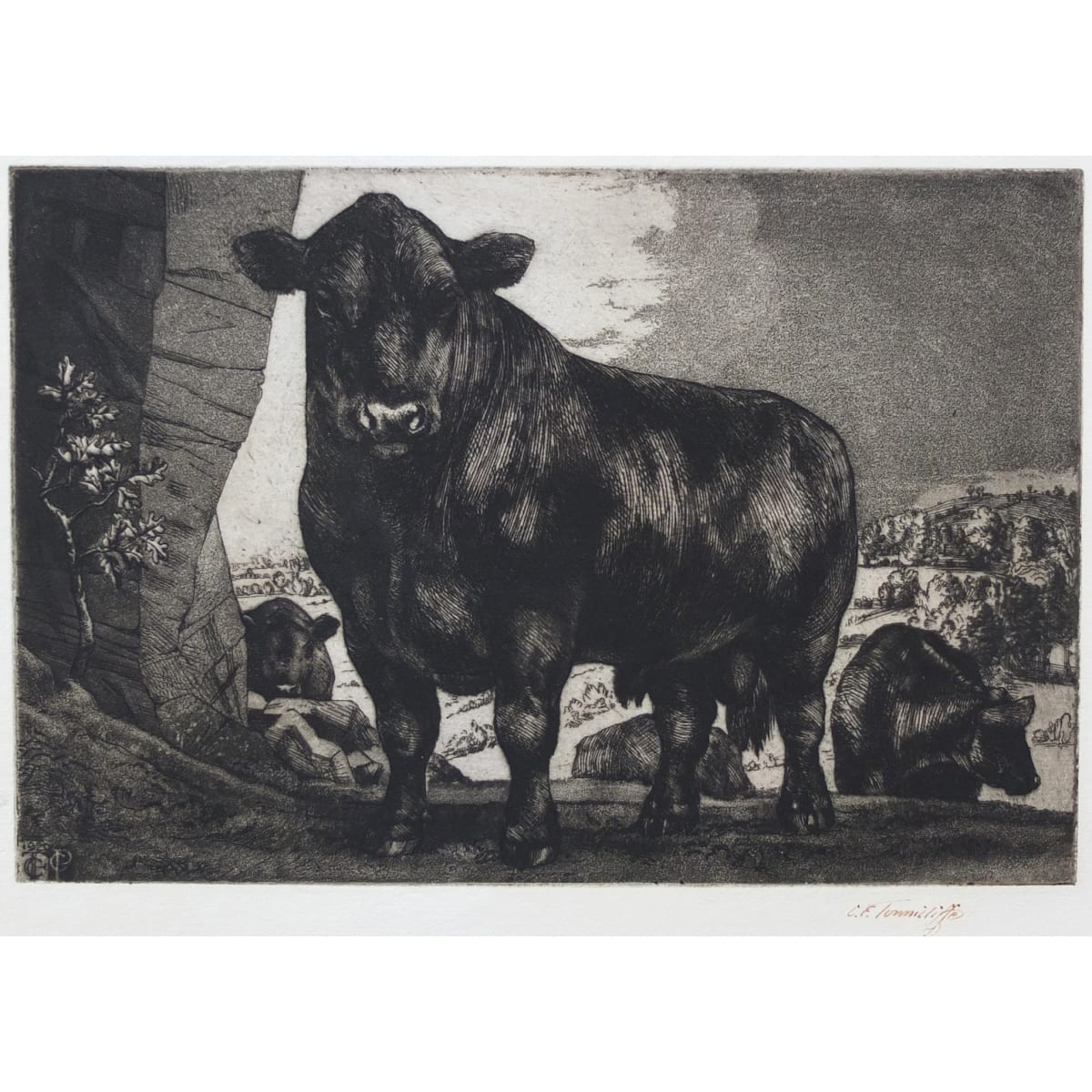 Charles Frederick Tunnicliffe Black Angus, 1929 monogrammed and dated 1929 in plate; signed in ink etching and aquatint plate size: 5 15/16 x 8 7/8 inches; sheet size: 5 5/8 x 11 inches