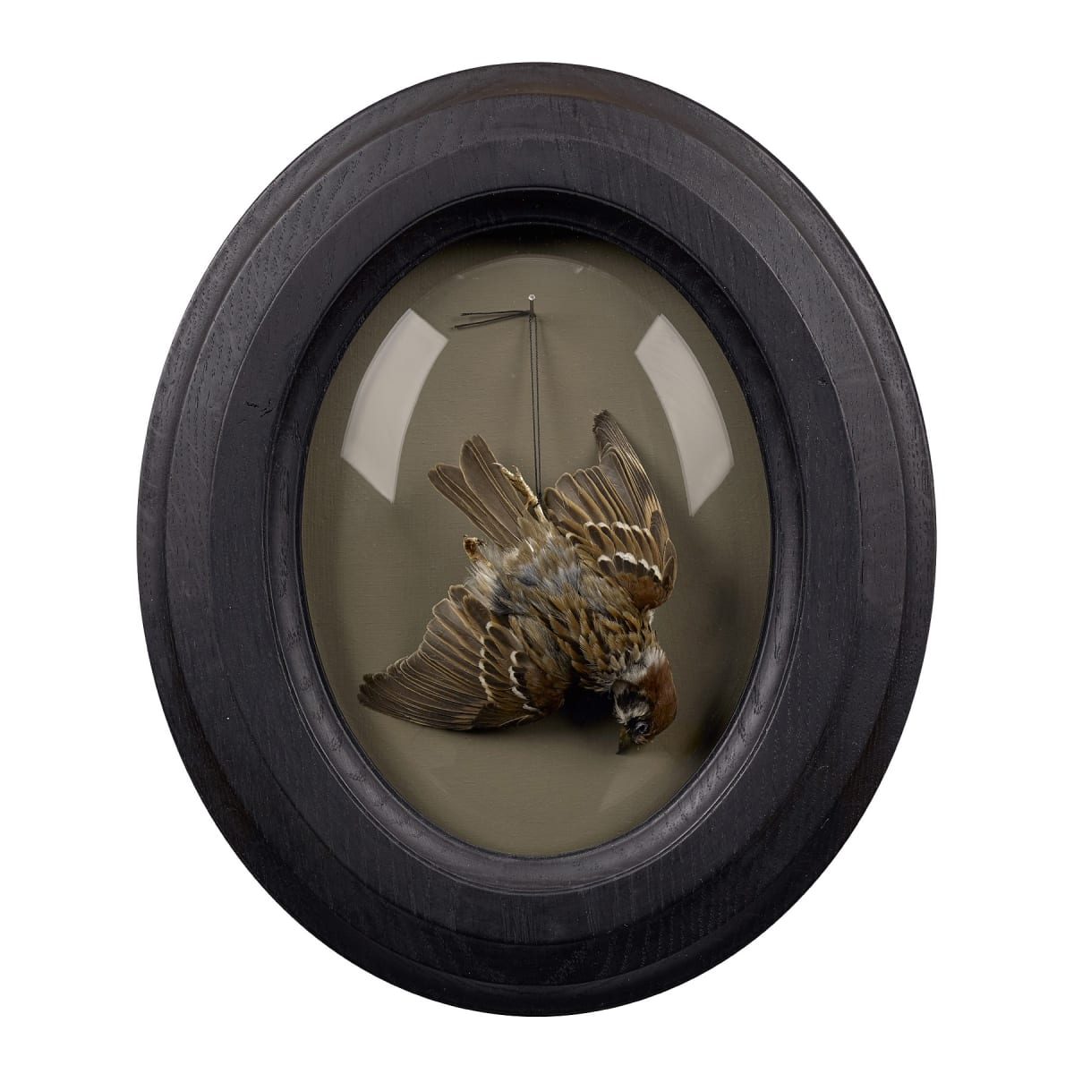 Fiona Dean To Cherish, 2019 tree sparrow in restored antique frame with domed glass 30 x 26 x 4 cm