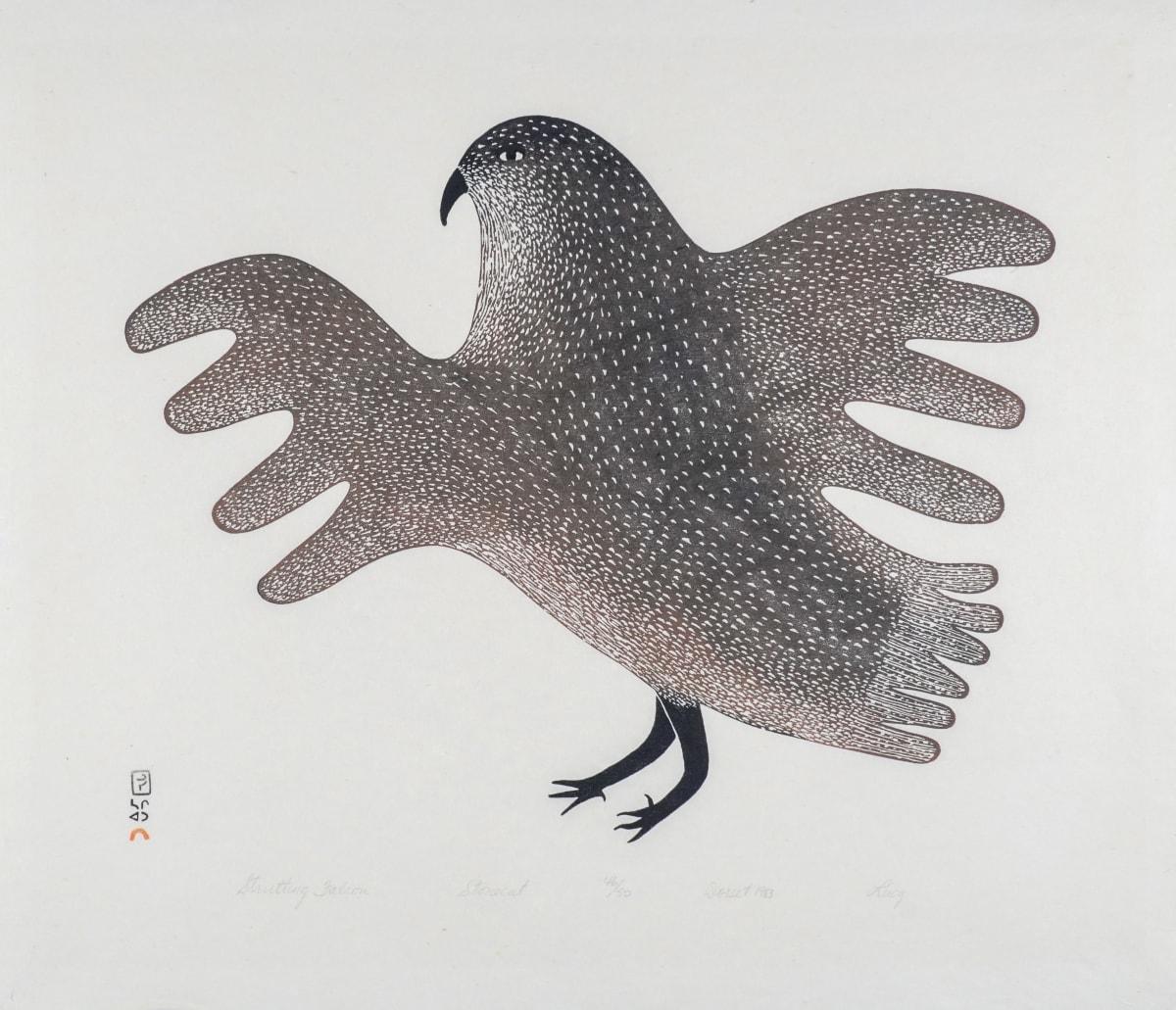 LOT 41 LUCY QINNUAYUAK (1915-1982) KINNGAIT (CAPE DORSET) Strutting Falcon, 1983 stonecut, 21 x 24 1/2 in (53.3 x 62.2 cm) ESTIMATE: $800 - $1,200