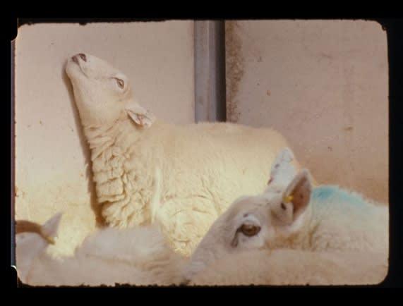 'Lamb' at Art Genève 2020