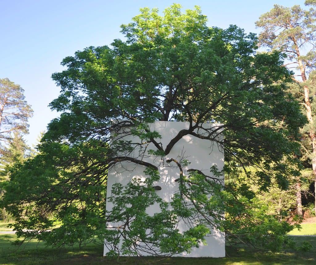Letha Wilson, Wall in Blue Ash Tree, 2011