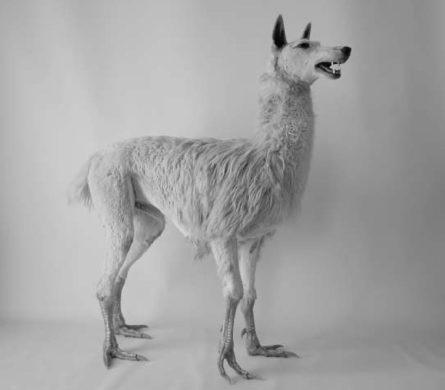Ridable, 2008, 156cm x 51cm x 150cm, Taxidermy, Image courtesy of Charles Avery & J.K.Loker