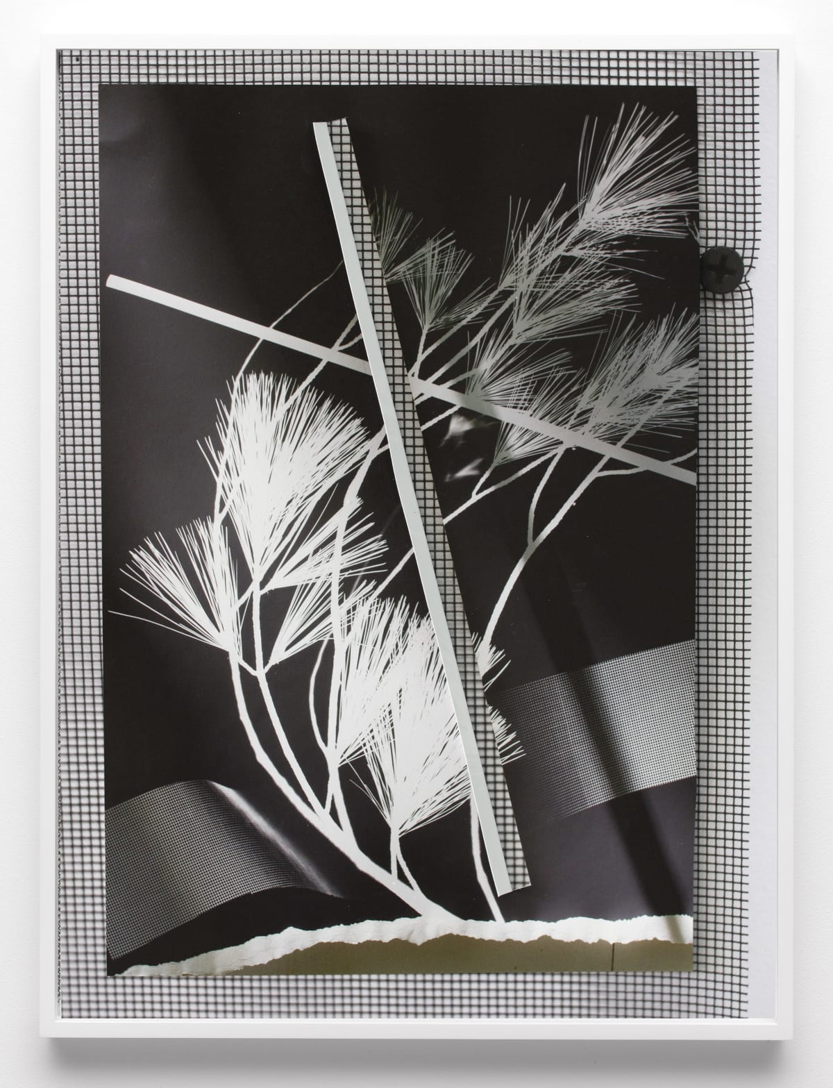 Letha Wilson Re-Photogram New Hampshire New York (Lung Cut Fold)