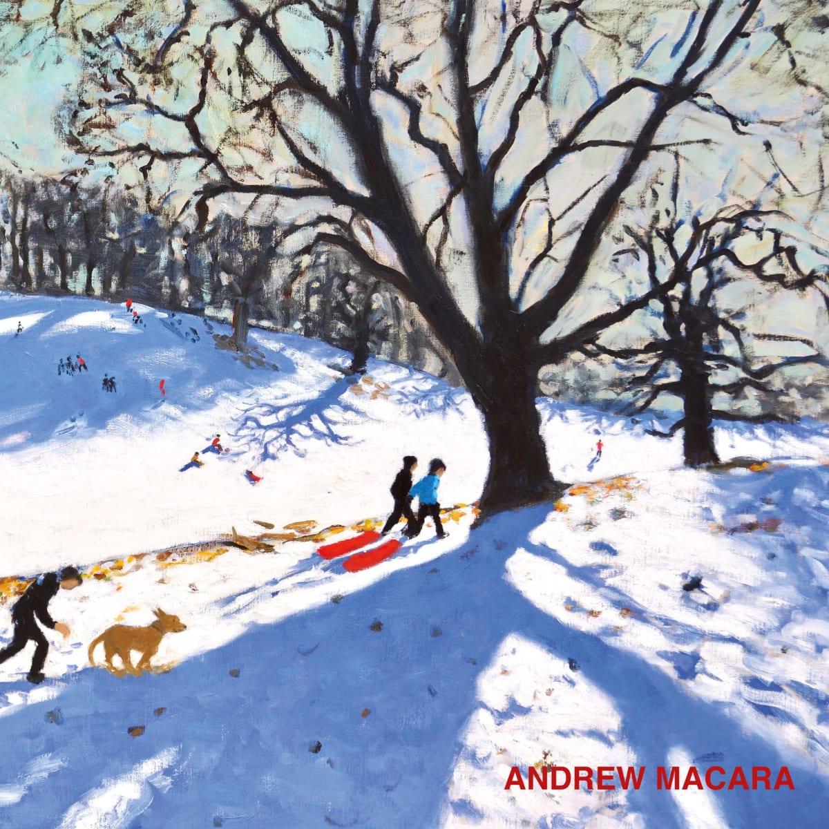 Andrew Macara: New Paintings