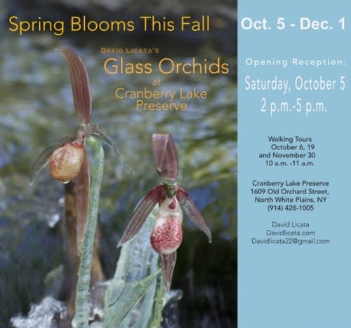 Glass Orchids at Cranberry Lake Preserve