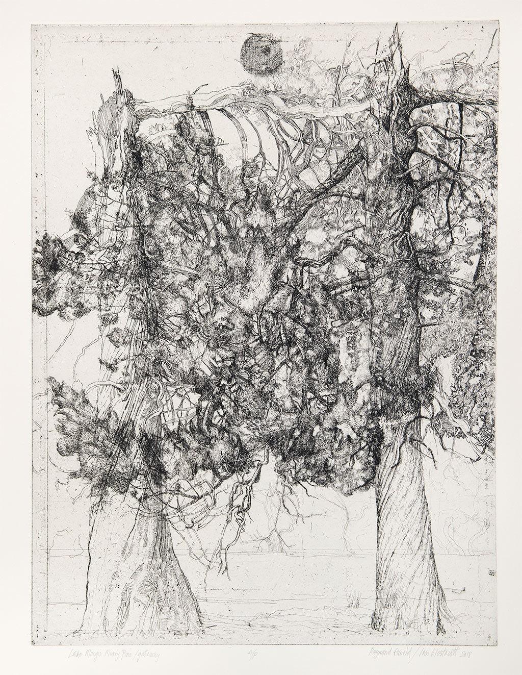 World Tree, Kapka Kassabova writes on trees and Ian Westacott