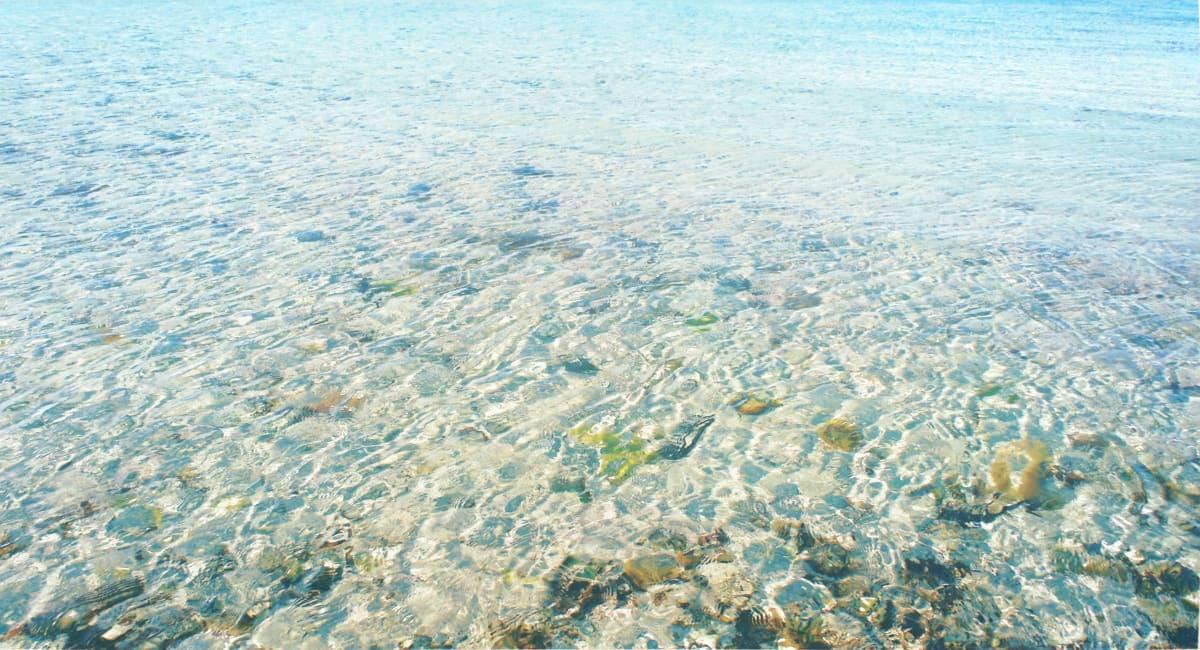 The Wonder of Water, Celebrating our Seas & Oceans