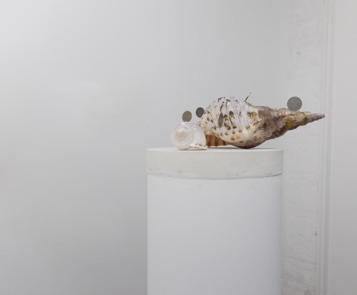 Adrian Abela, Sells/Sea/Shells (Semazen {for coin history}) #1, 2017