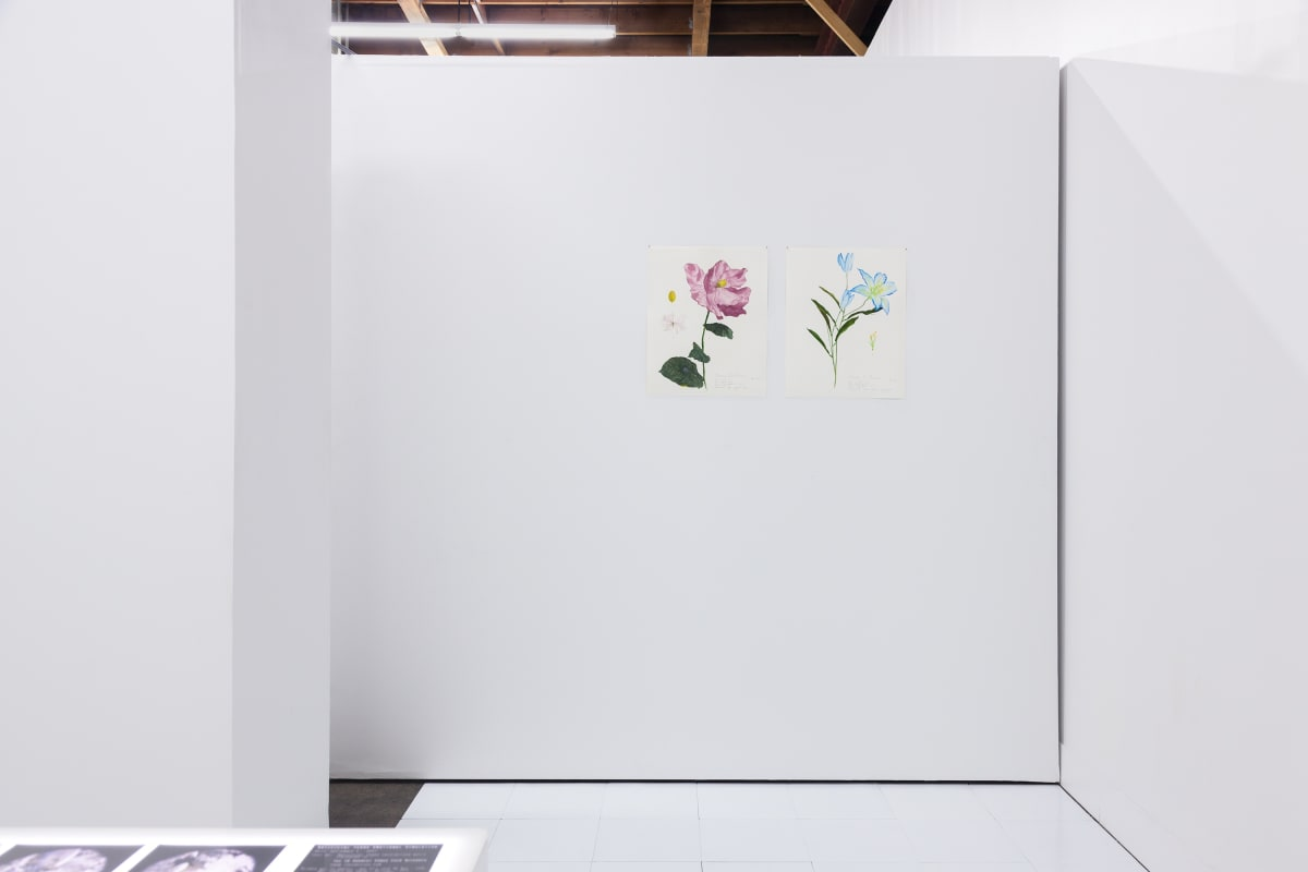 Installation View, Dreaming of Dying Robots and Artificial Flowers.