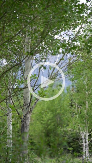 Wyoming 3x180° : 36 Hour Film