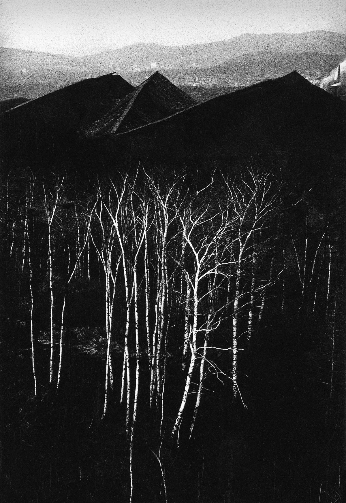 Michal Cala, Forest at the bottom of the Slagheaps, Walbrzych, 1979