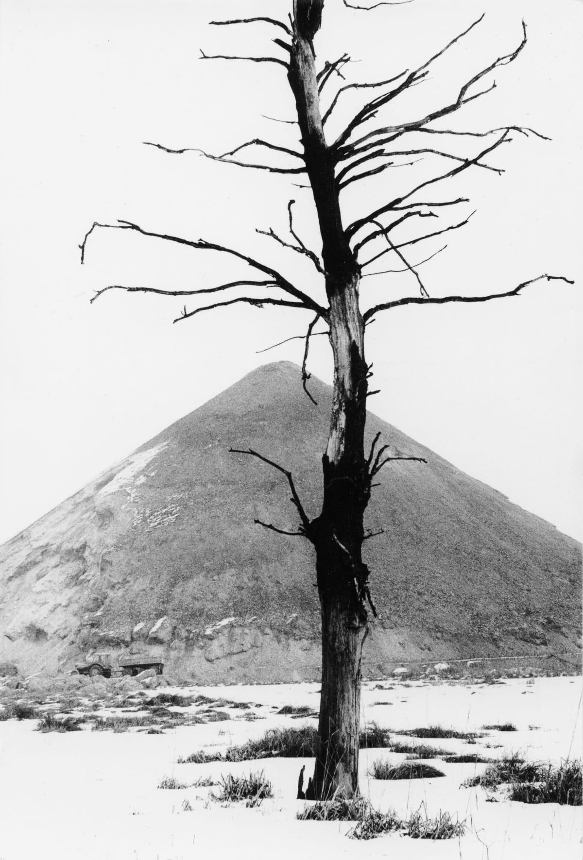 Michal Cala, ' A dead tree and the slagheap/ 'Martwe drzewo i halda', Brzeszcze, 1978
