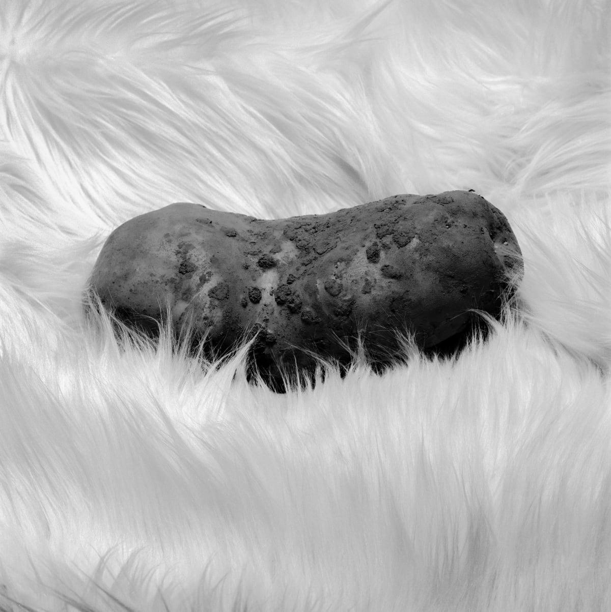 Brian Griffin, Potato on Fur, 2017
