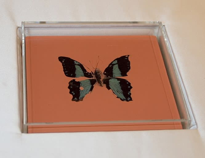 "DAMIEN HIRST Butterfly Painting Household gloss on canvas, butterfly, perspex Series of 13 160 x 160 x 55 mm 2005 , Arial, sans-serif; line-height: normal;"">"