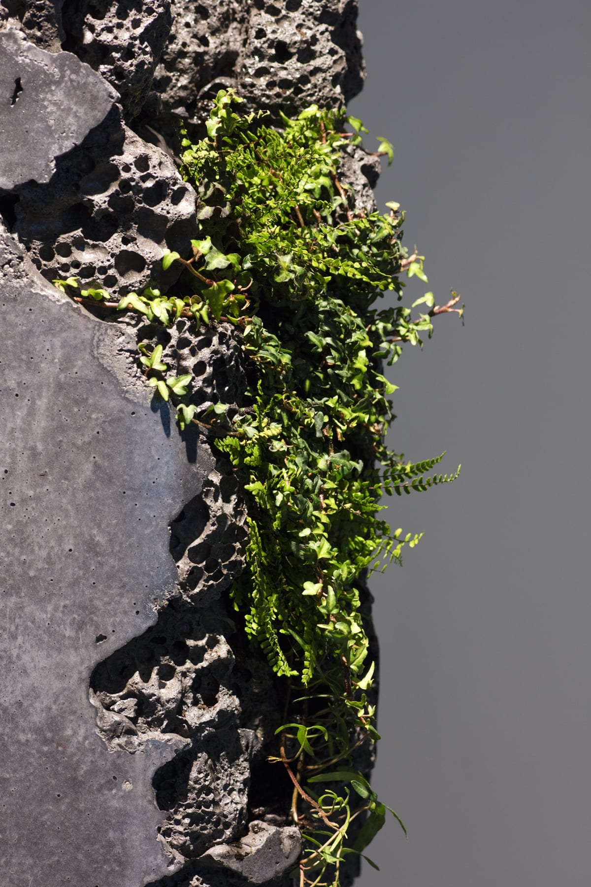 Jamie North Forward Projection (detail), 2019 Concrete, blast furnace slag, steel, epoxy and plants 300 (diameter) x 160 cm