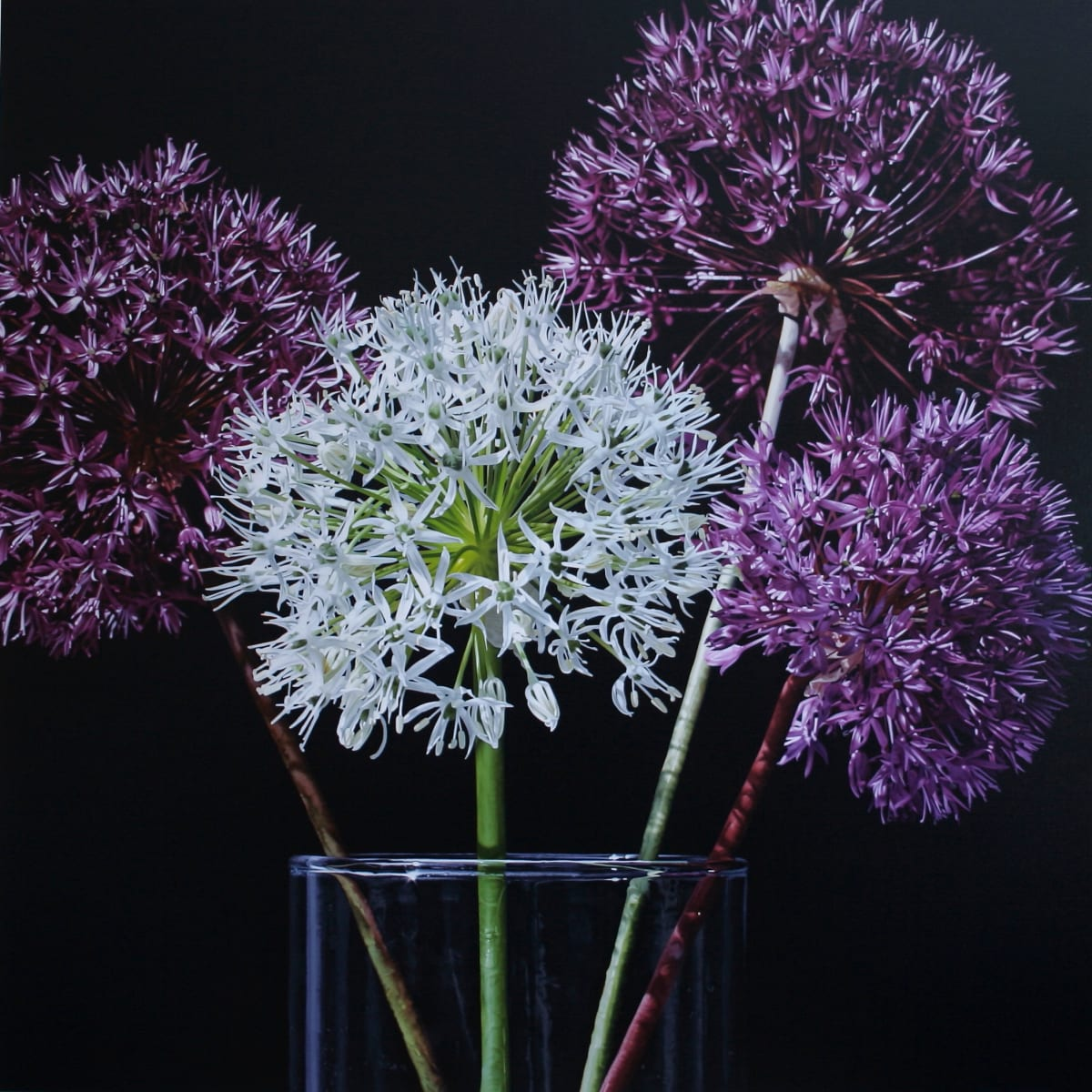 Glen Semple A Little Bit of Allium Acrylic on canvas 120 x 120 cm