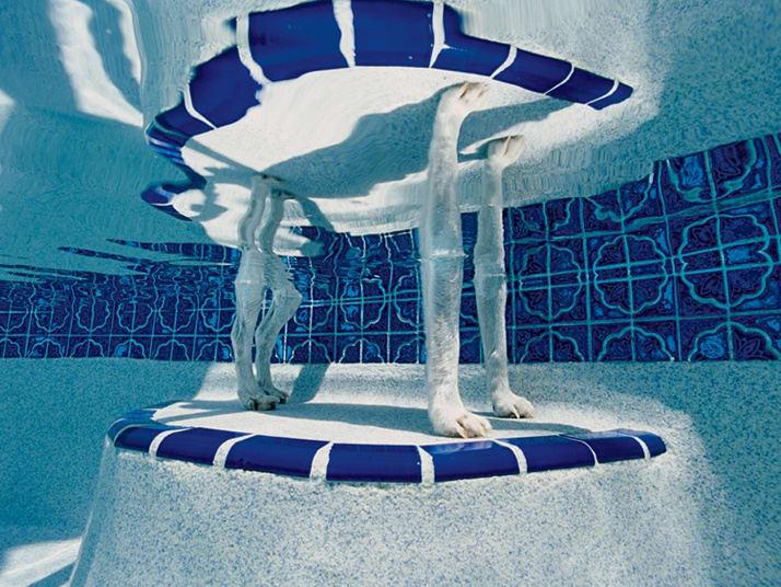 Alex Kirkbride Bubba, Greg and Julie's pool, Crystal River, Florida Lambda C print 101.5 x 152.5 cm