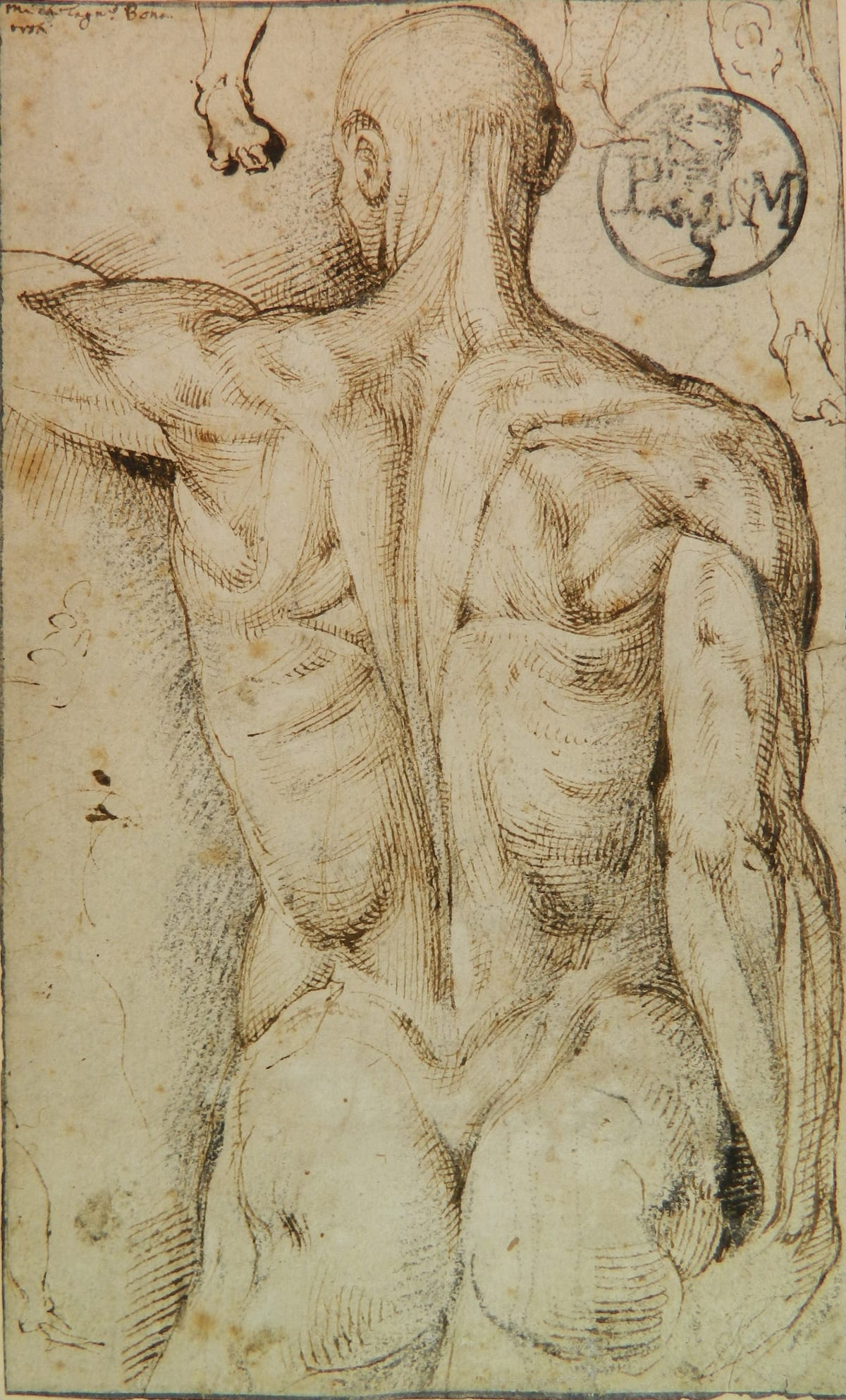 Circle of Michelangelo (1475-1564) Anatomy Study (recto) and Skeletal Study (verso)
