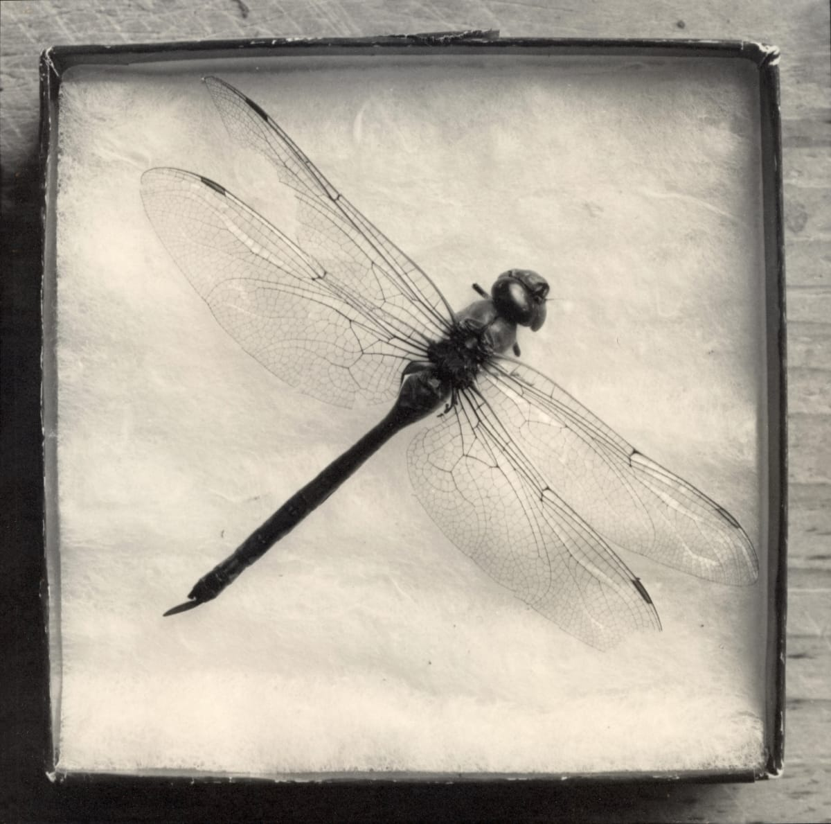 Dragonfly Box, 2000