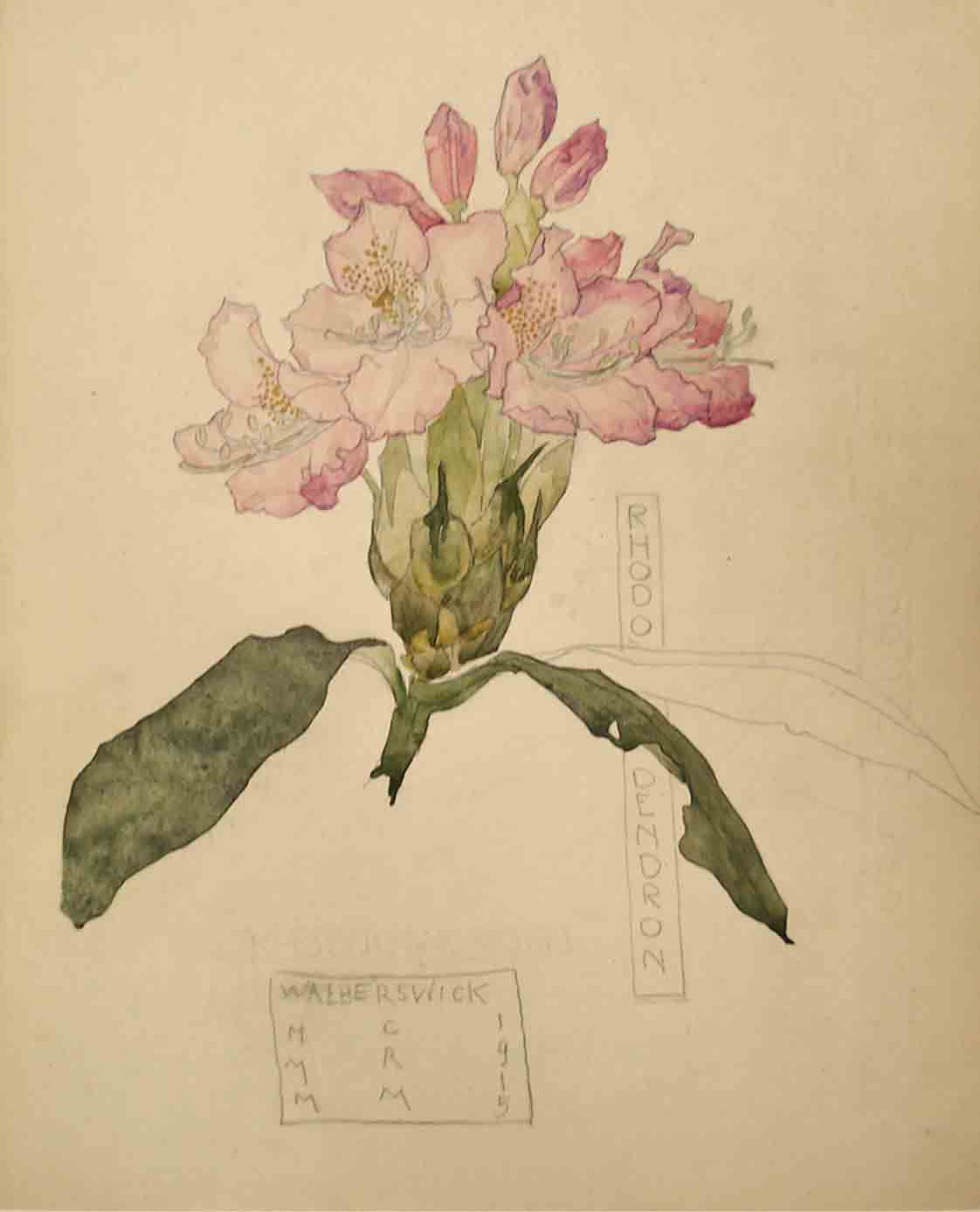 Charles Rennie Mackintosh Rhododendron Walberswick, 1915 Pencil and watercolor on paper 10 x 8 inches SOLD