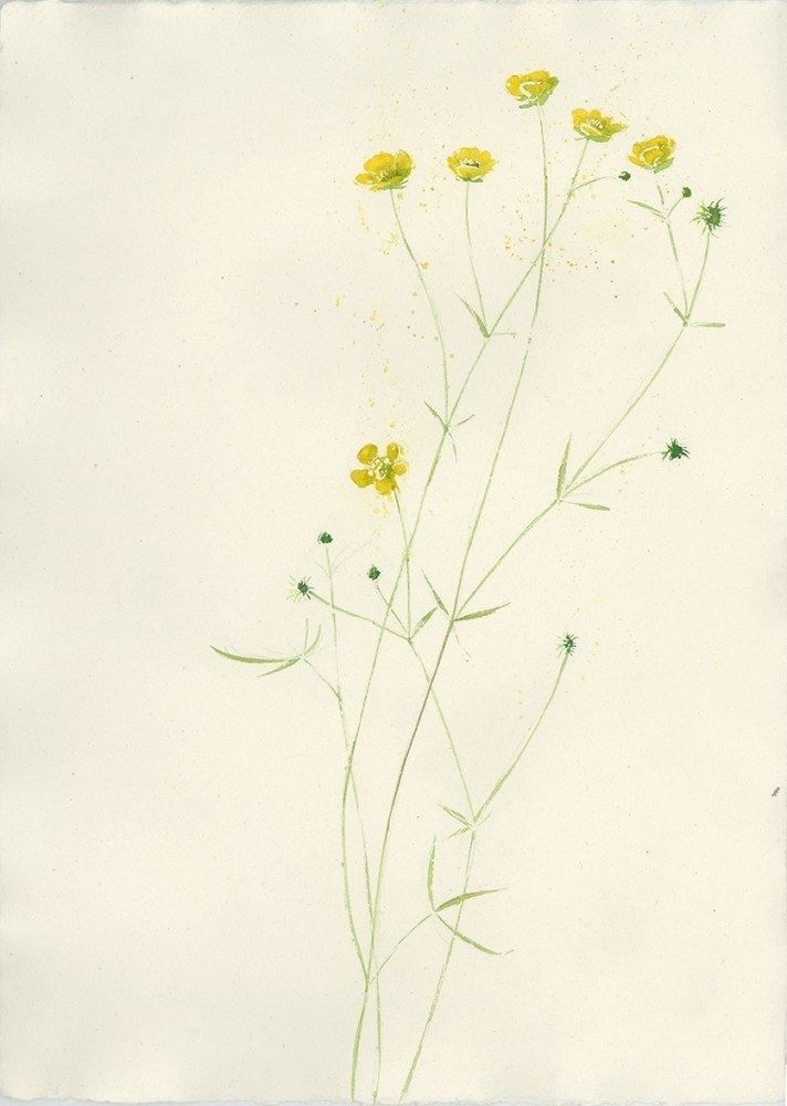 <span class=&#34;link fancybox-details-link&#34;><a href=&#34;/exhibitions/25/works/image_standalone498/&#34;>View Detail Page</a></span><p><span>Sally Bamber</span></p><p><em>Meadow Buttercup</em></p>