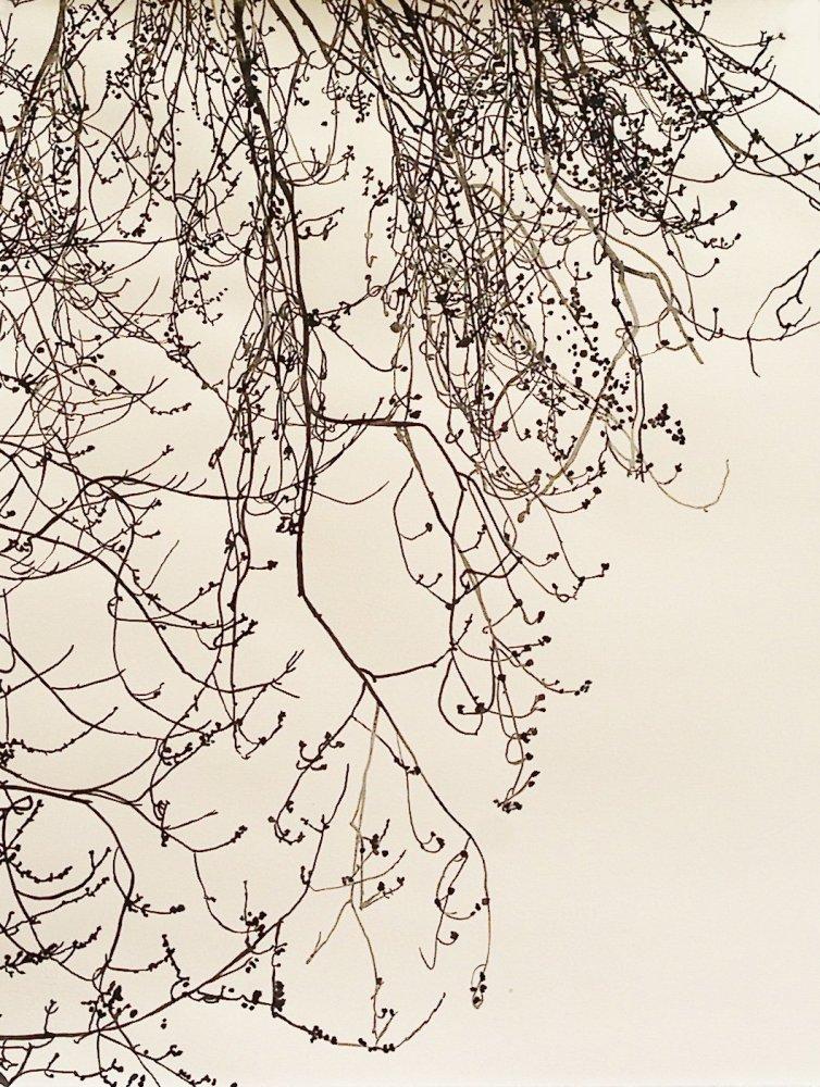 <p>I'll Fly Away 2011</p><p>watercolour on paper</p><p>65.5 x 50.5 cms</p>