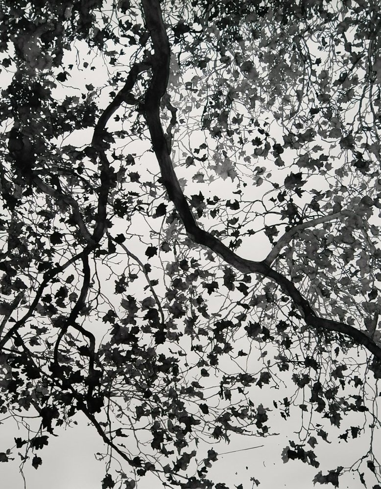 "<div class=""title""><em>Wild wood</em>, 2013</div><div class=""medium"">watercolour on paper</div><div class=""dimensions"">152 x 121.5 cms</div>"