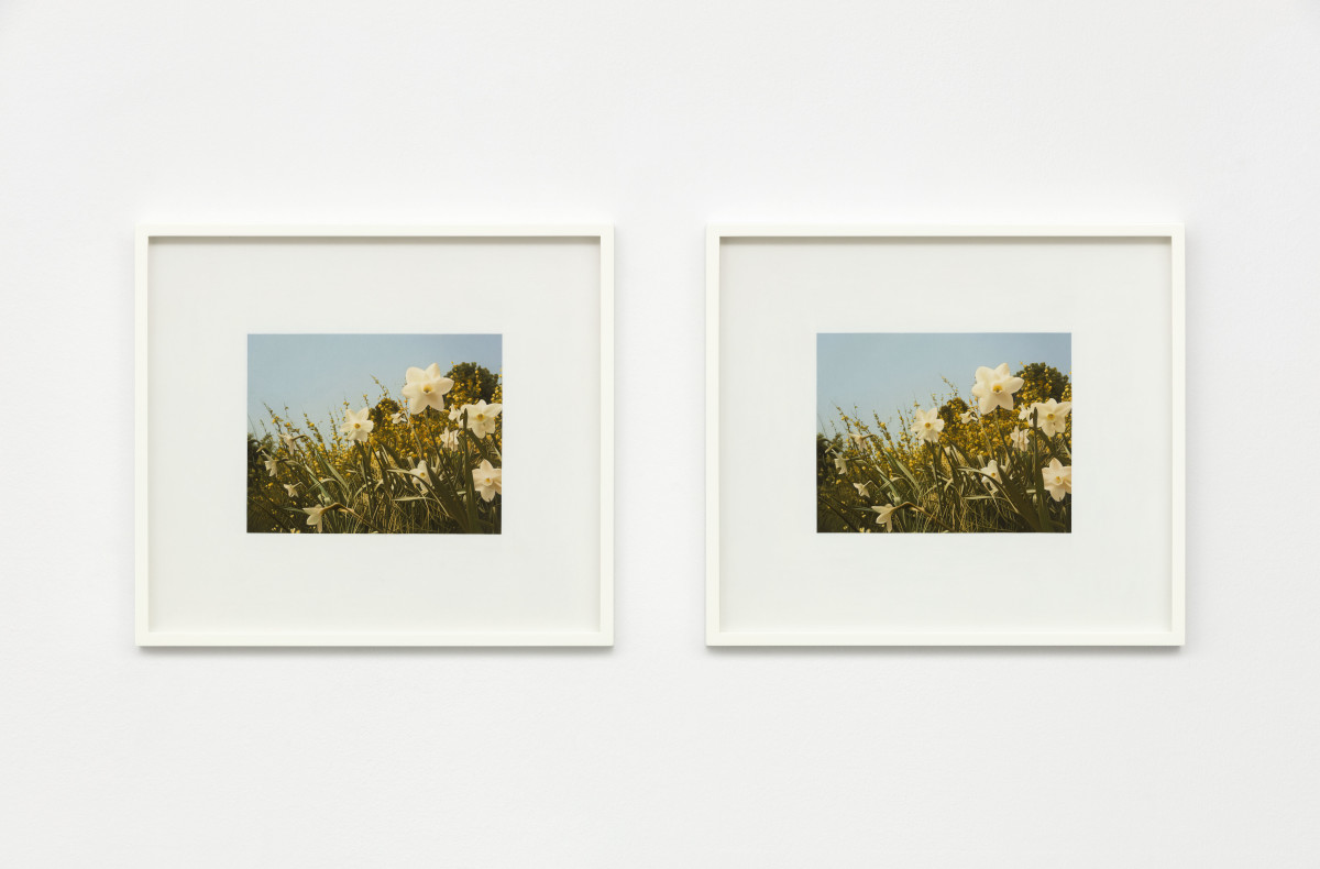 Andrew Grassie Flowers 1, Flowers 2, 2019 Tempera on paper on board 14,8 x 18,8 cm (5 1/2 x 7 1/8 in) (image) each, 2 parts 31,1 x 35,2 x 3 cm (12 1/4 x 13 3/4 x 1 1/8 in) (framed) each, 2 parts