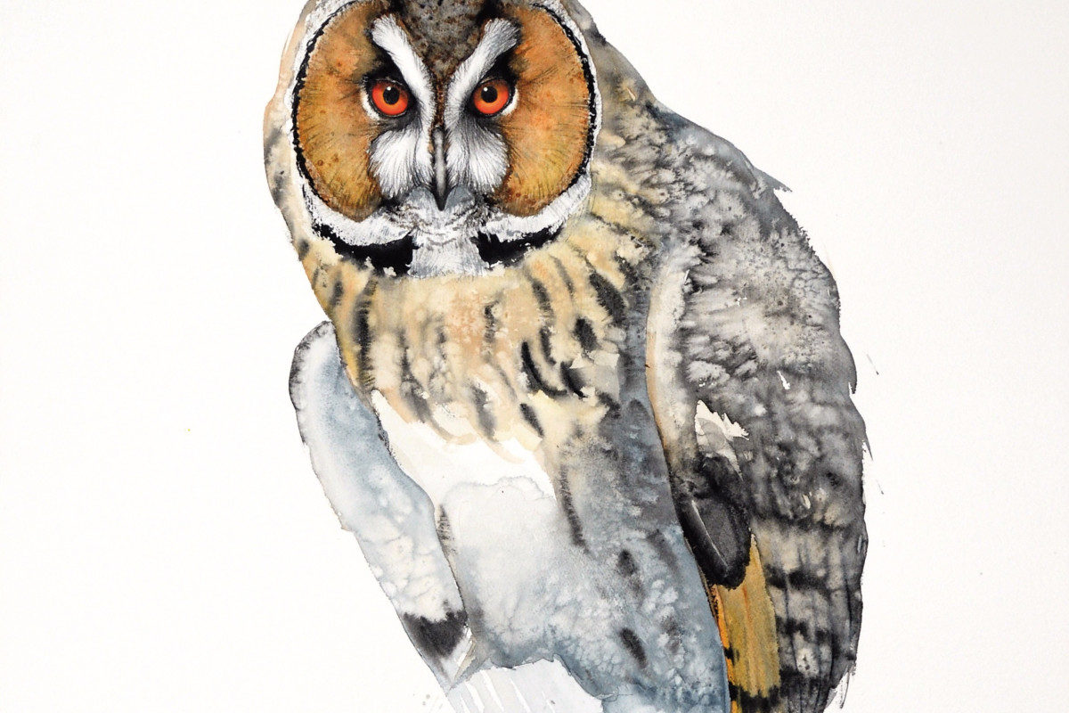 Long-eared Owl (detail), watercolour on Arches watercolour paper, 106 x 75 cms