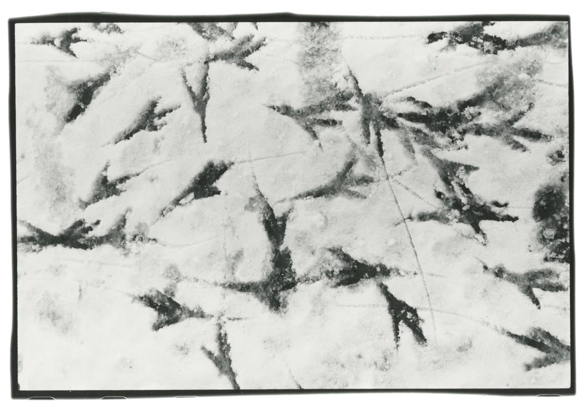 Masahisa Fukase Works Michael Hoppen Gallery