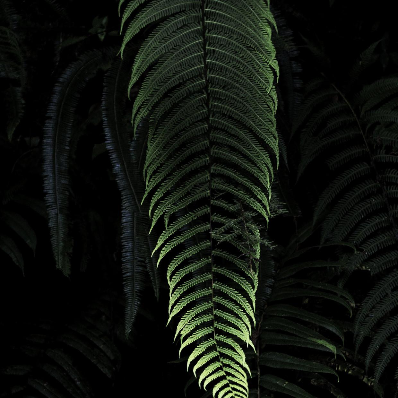 Luminescent leaf, 2018