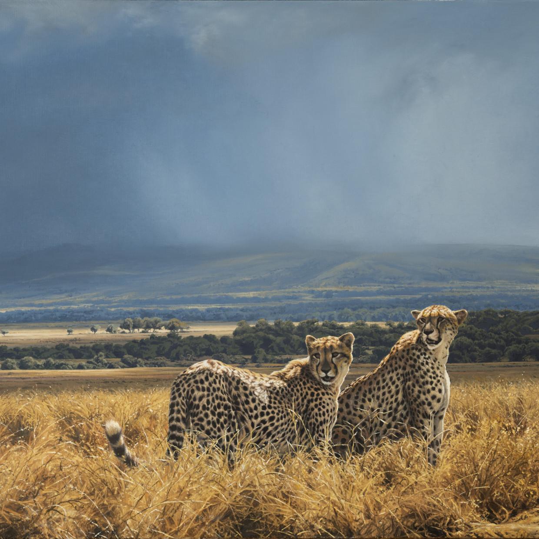 Africa Petworth