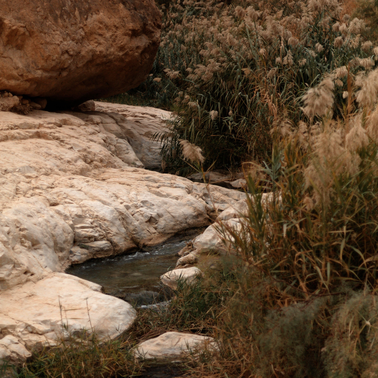 """Ilanit Illouz Wadi Qelt, in The Stony Light From the Louis Roederer Discovery Award section, Ilanit Illouz's """"Wadi Qelt,in the..."""